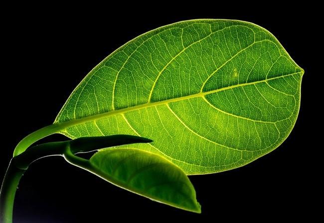 servizio agritalia per la cura delle tue piante online