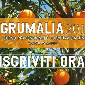 Corso professionale potatura agrumi
