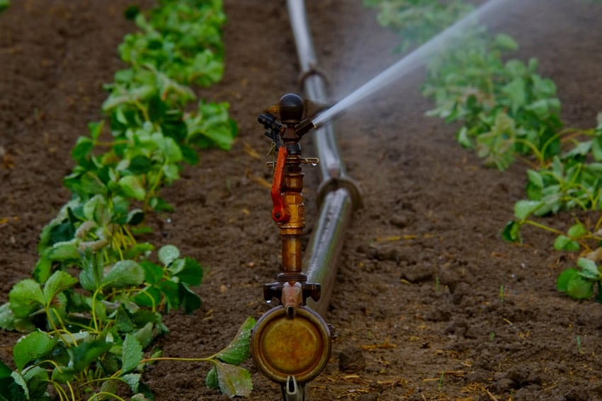 metodi-di-irrigazione vantaggi e svantaggi